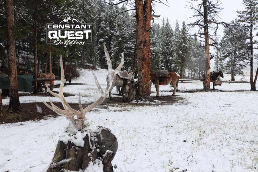 Constant Quest Outfitters Wyoming